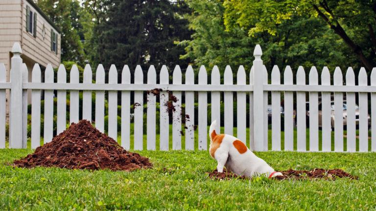 dog-ruining-yard